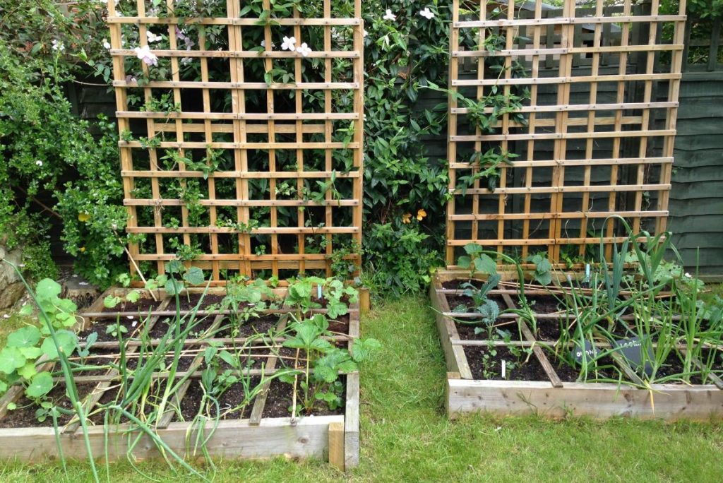 How to Succeed in Square Foot Gardening
